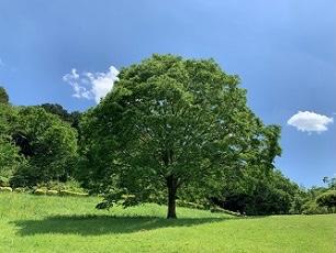 針葉樹と広葉樹